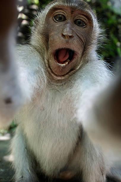 affe ein lustiger selfie - entfernen von tierhaaren stock-fotos und bilder