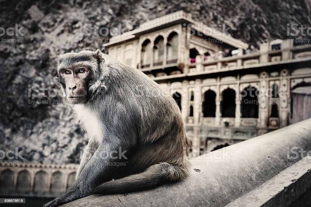 Monkey temple Galtaji Rajasthan India stock photo