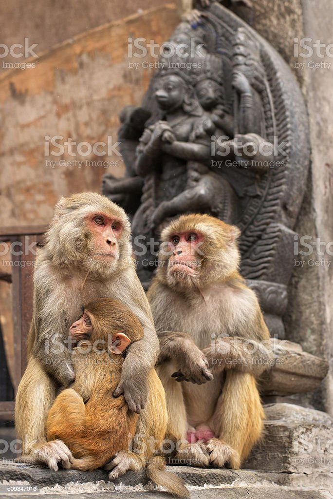 Monkey Temple royalty-free stock photo