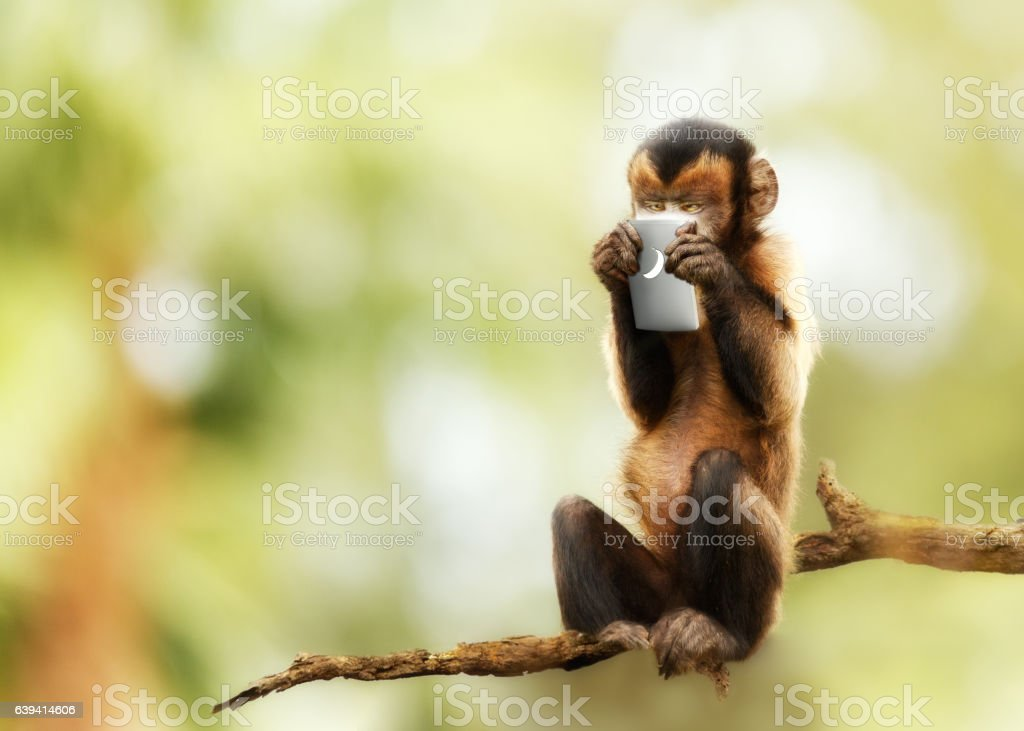 Monkey Texting on Cell Phone stock photo
