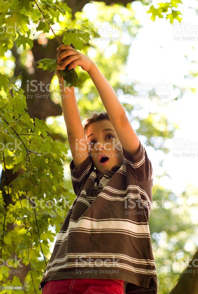 Monkey time, again stock photo