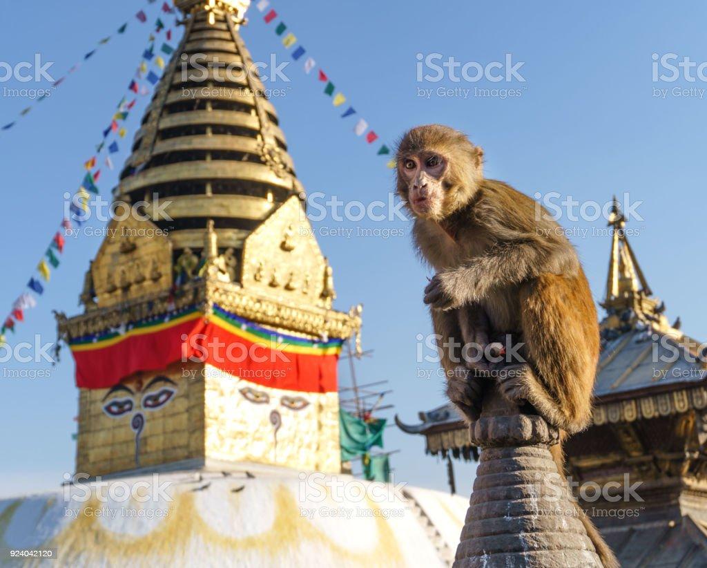 Monkeys around Monkey Temple stock photo
