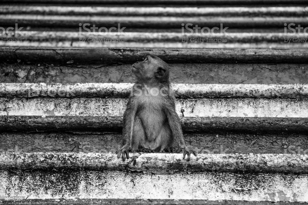 Monkeys Batu Caves royalty-free stock photo