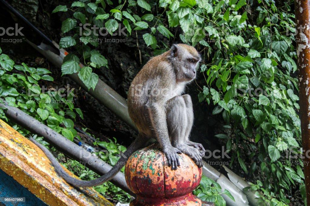 猴子巴洞 - 免版稅動物圖庫照片