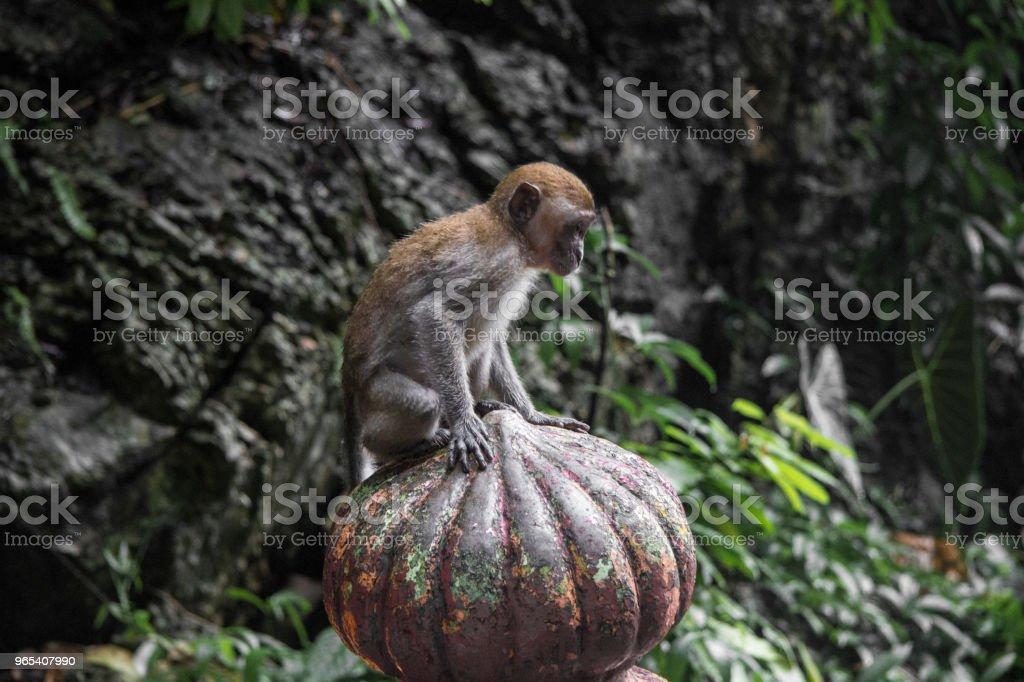 Monkeys Batu Caves zbiór zdjęć royalty-free