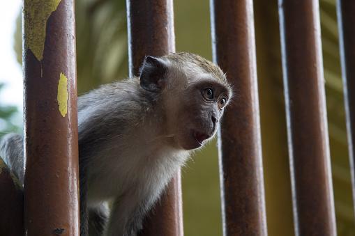 원숭이 바투 동굴 0명에 대한 스톡 사진 및 기타 이미지