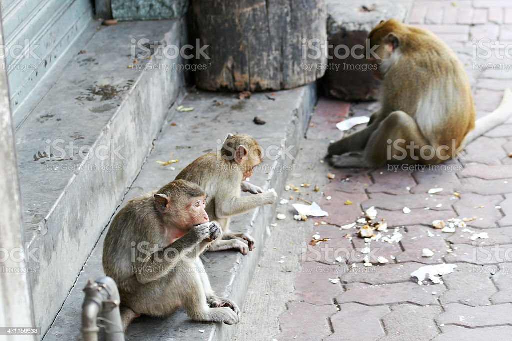 Monkeys on the street royalty-free stock photo