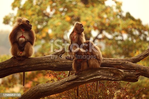 View of four monkeys watching around.