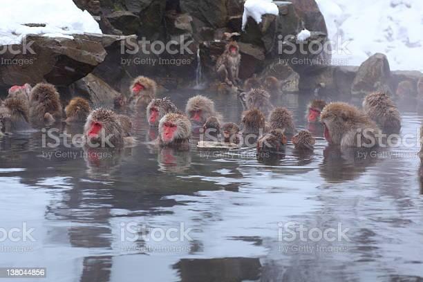 Monkeys sitting in a hot spring picture id138044856?b=1&k=6&m=138044856&s=612x612&h=twagqj7snqozmx2y iymwgqjl8l9uw1r1rgcvpsbbdu=