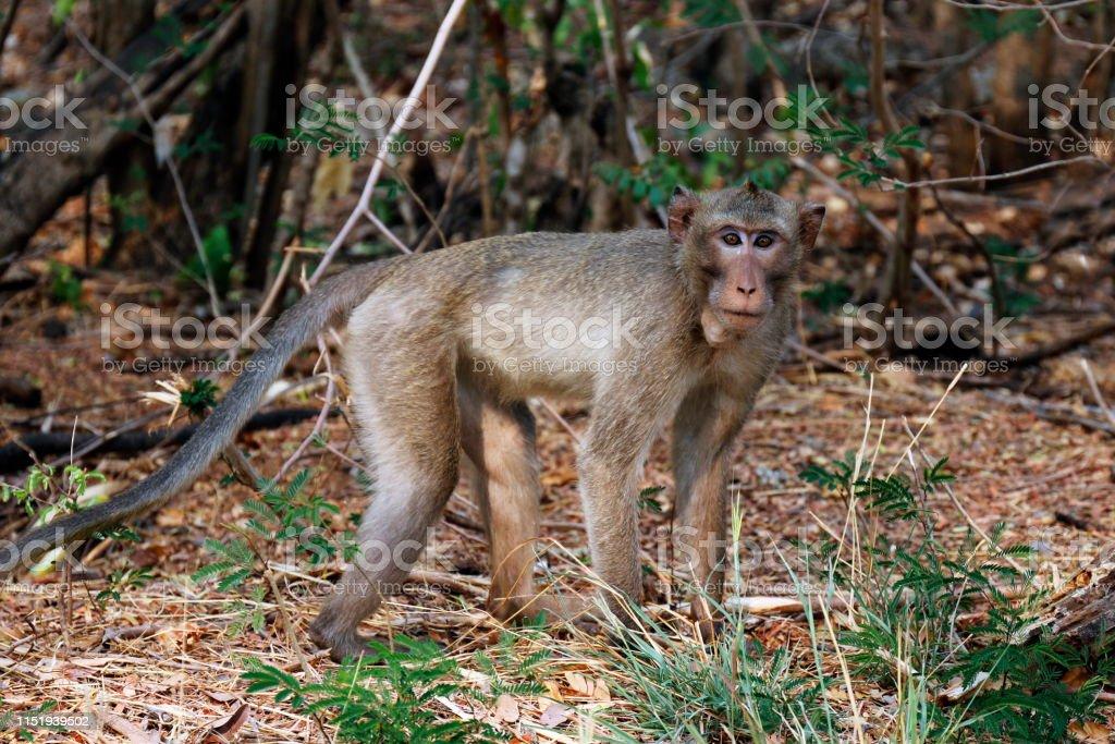 Monkeys walk in the wild