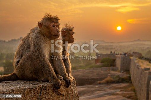 2 monkeys watching the sunset in Hampi, India