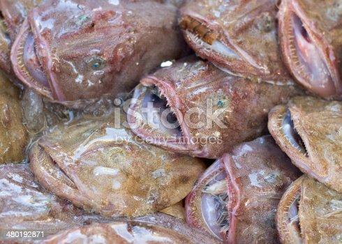 635931692istockphoto Monkfishes on a fishmarket 480192871