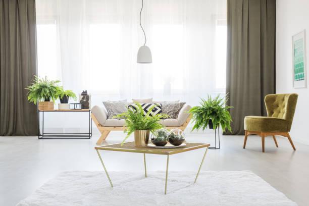 monochromatische wohnzimmer mit farnen - oliven wohnzimmer stock-fotos und bilder