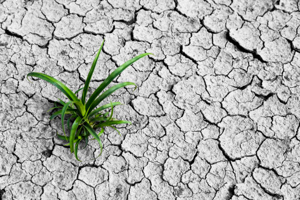 monochromatic picture, dry and cracked ground. monochromatic picture, dry and cracked ground. lake bed stock pictures, royalty-free photos & images