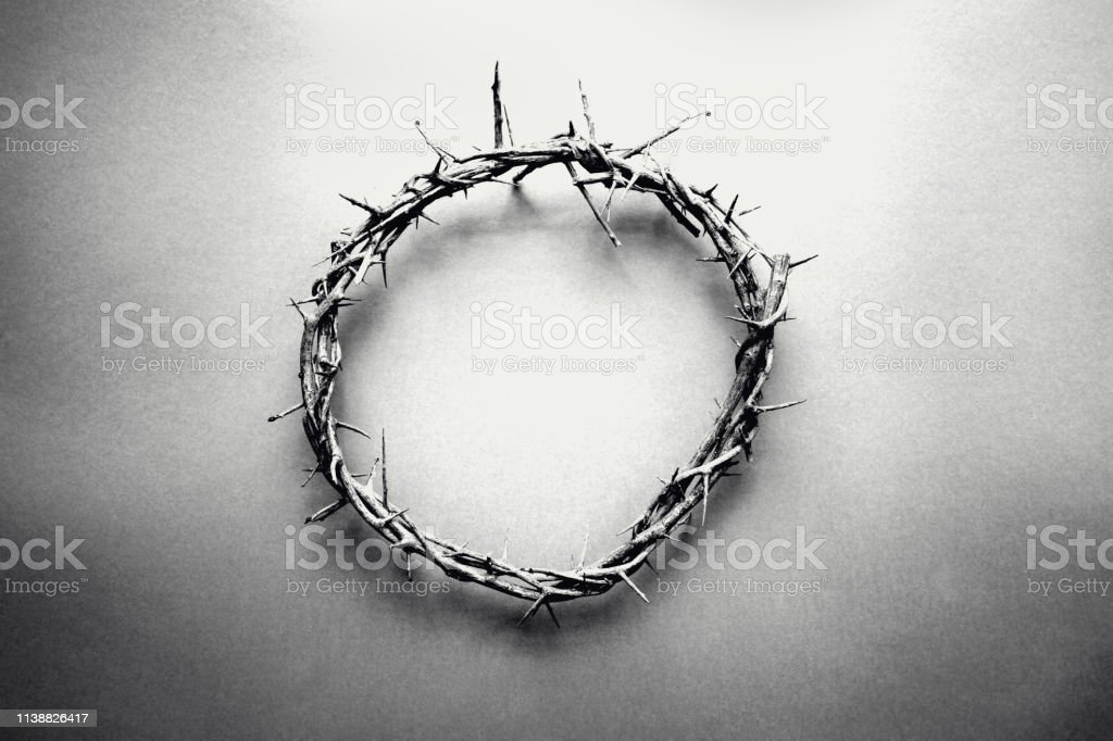 Monochrome Crown of Thorns stock photo