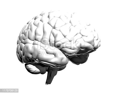 istock Monochrome human brain illustration isolated on white BG 1173705120