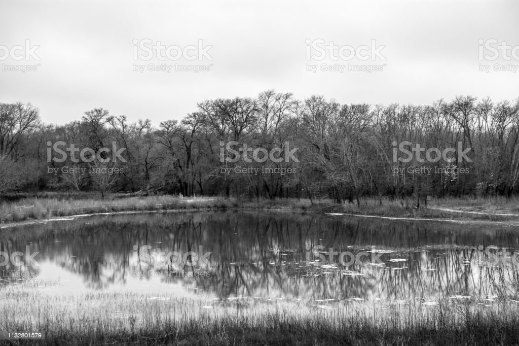 monochrome landscape with trees and reflection stock photo