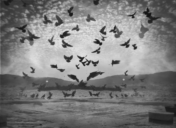 Monochrome multiple exposure view of pigeons flying in the coastline