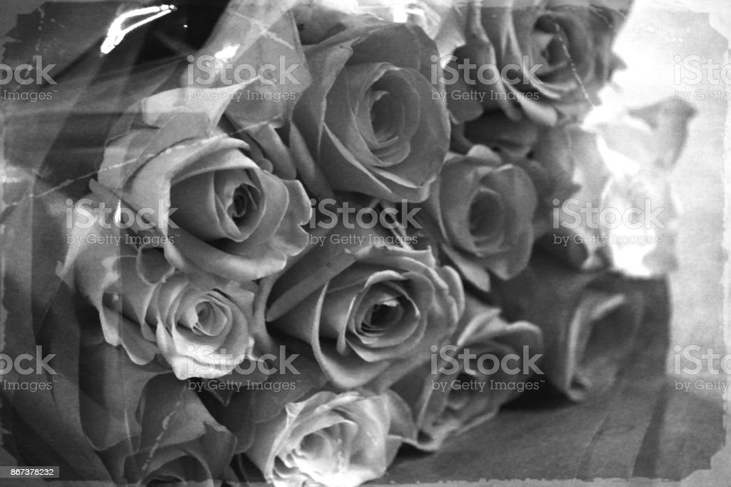Monochrome roses stock photo