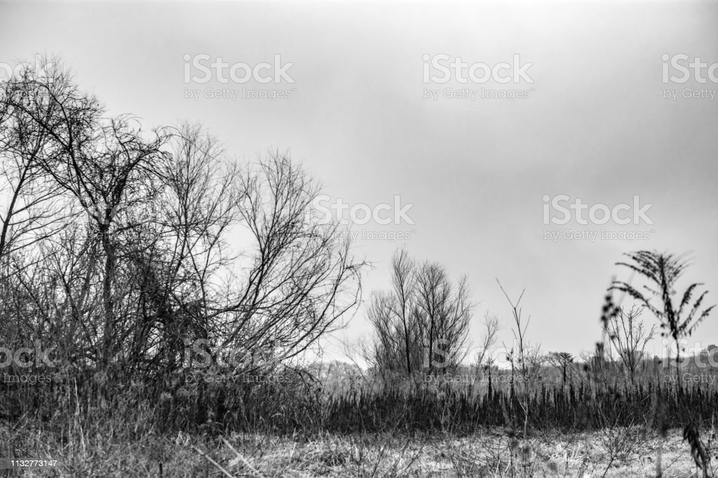 monochrome Texas landscape trees grasses stock photo