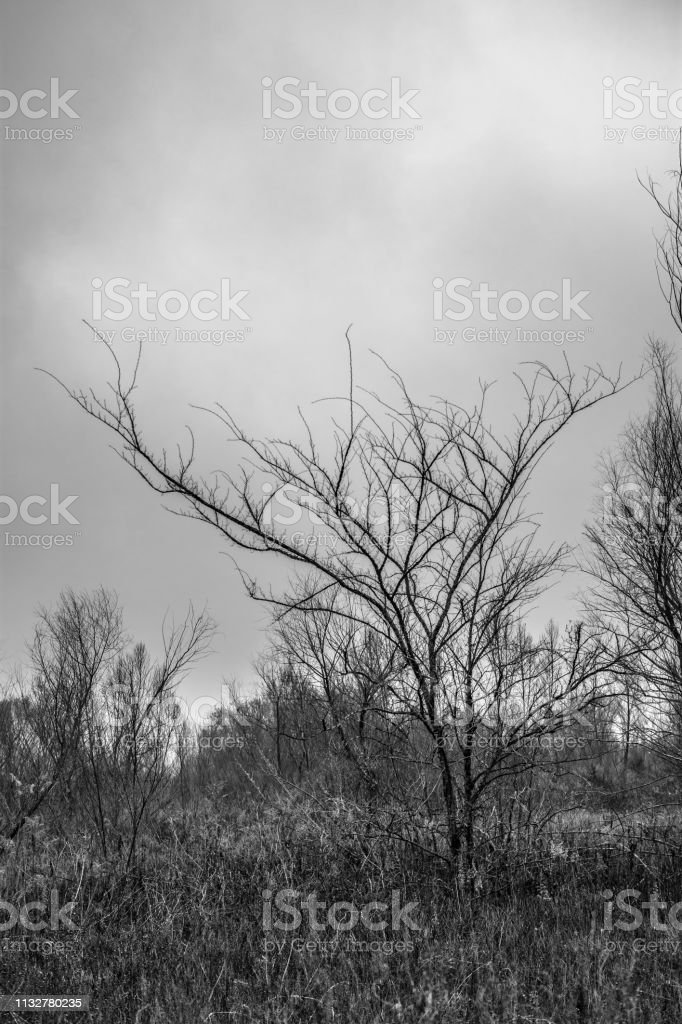 monochrome trees and grasses landscape stock photo