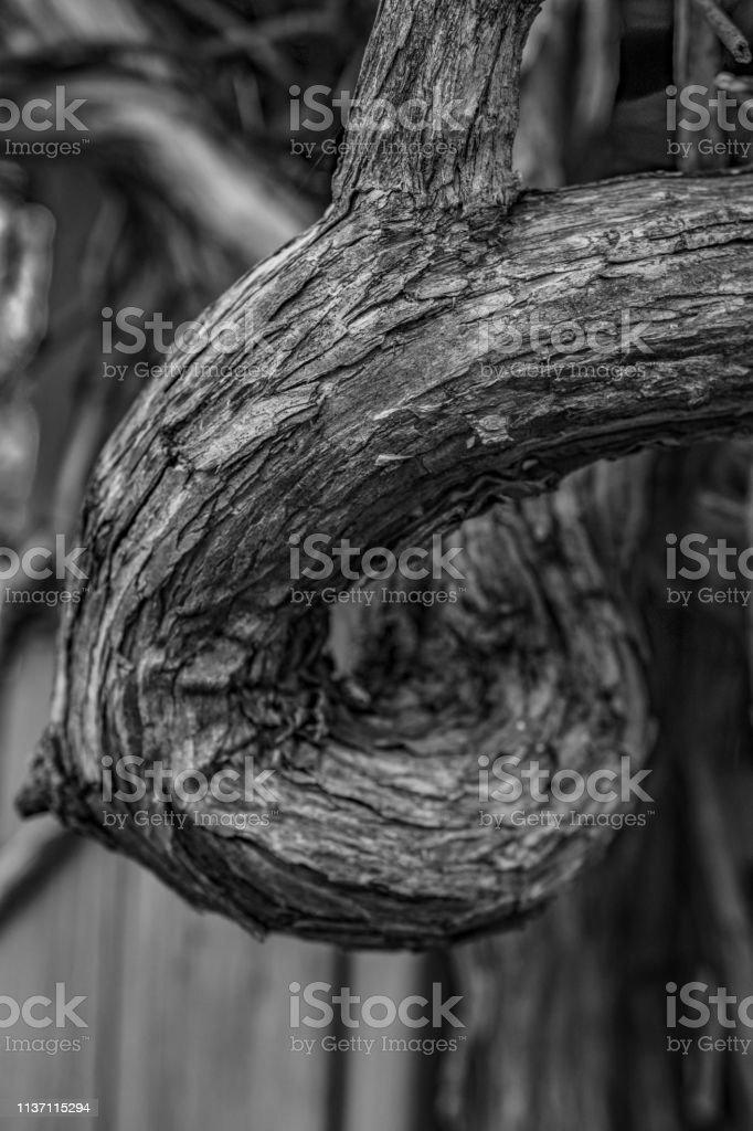 monochrome twisted branch stock photo