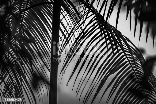 Monochrome Abstract Exposure of Rain Forest Vegetation in Costa Rica. Great for print and frame on the wall.