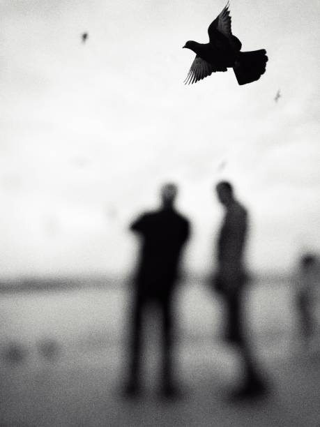 Monochrome view of a pigeon flying over the people