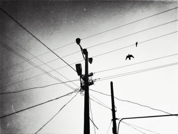 Monochrome view of steel cables and birds