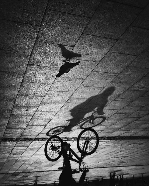 Monochrome view of the shadows of pigeon and cyclist