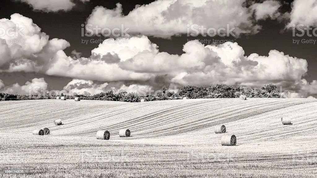 Monochrome wheat field with straw bales and cloudy sky royalty-free stock photo