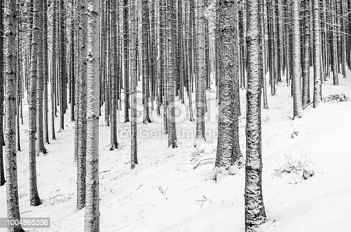 monochrome Winter landscape - trees and snow