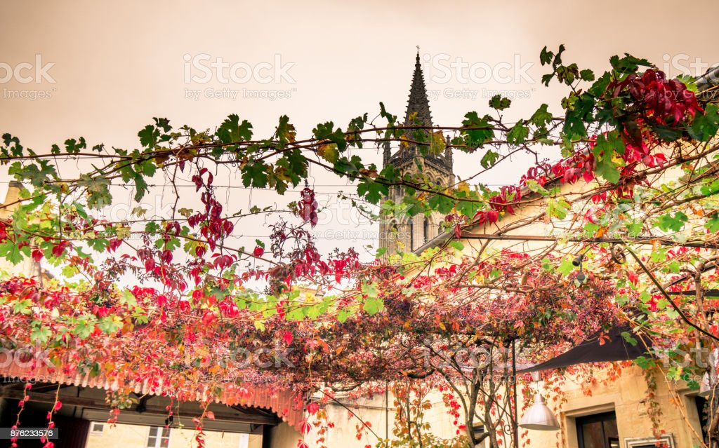Monolithic church and its bell tower in Saint-Emilion in France seen through grapes stock photo