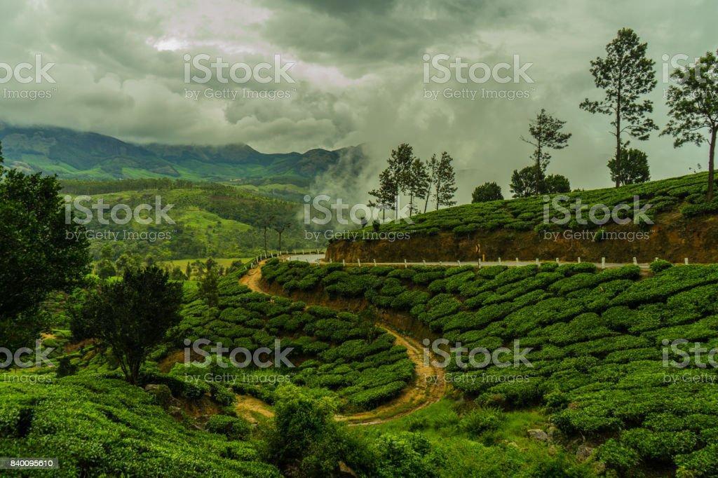 Monsoon Rain Arriving in Indian Tea Plantation