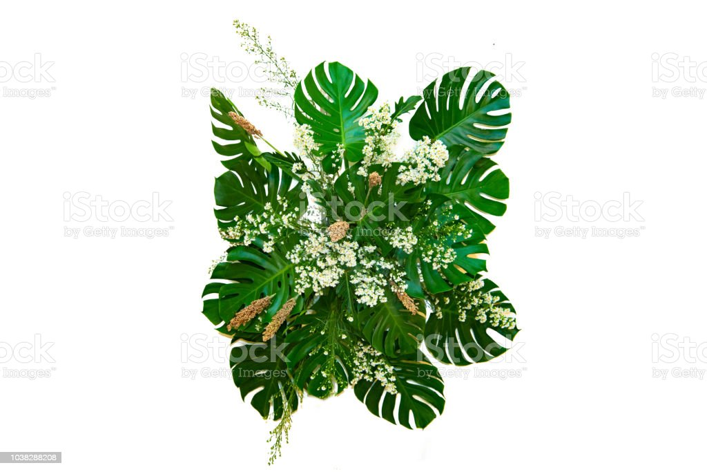 Monster Leaves Used In Modern Designs Tropical Leaves Foliage Plant Bush Floral Arrangement Nature Backdrop Isolated Stock Photo Download Image Now Istock With every tropical arrangement comes a selection of foliage that also is tropical in nature and the leaves are versatile, and their shine and shape make are a perfect complement to many floral. monster leaves used in modern designs tropical leaves foliage plant bush floral arrangement nature backdrop isolated stock photo download image now istock