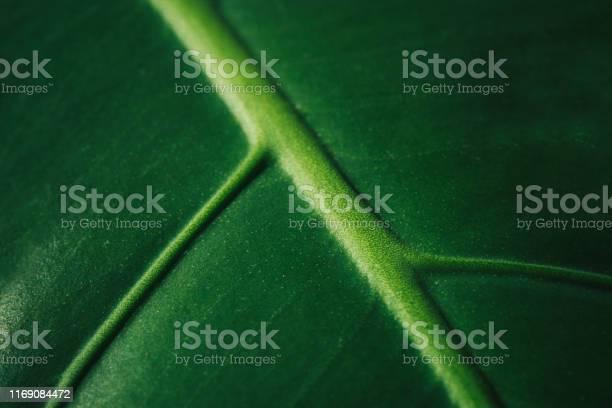 Monstera leaf closeup details of the modern interior interior design picture id1169084472?b=1&k=6&m=1169084472&s=612x612&h=z0xlwztdkclsxox2jj8sycpn2fqp6hvethqpg8jbem4=