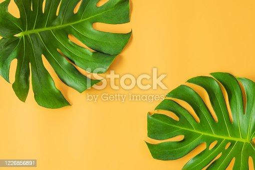 1146114680 istock photo Monstera leafs lay on orange background. 1226856891