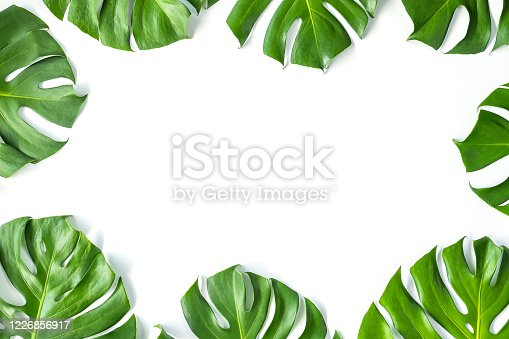 1145104190 istock photo Monstera leafs lay on white background. 1226856917