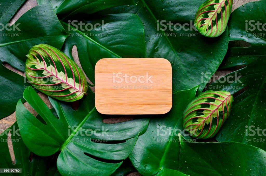 Monstera leaves tropical background stock photo