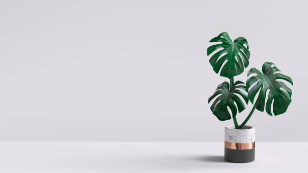 monstera plant in pot geïsoleerd op witte achtergrond. minimale tropische verlaat kamerplant home decor. 3d-rendering. - bloempot stockfoto's en -beelden