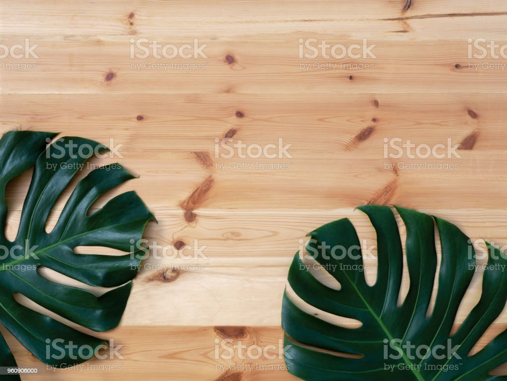 Monstera plant leaves, the tropical evergreen vine on wood background with copy spac stock photo