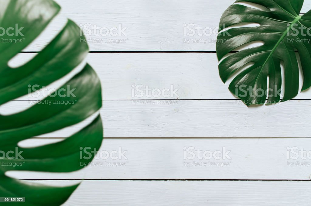 Monstera tropical leaves frame on white wooden planks background royalty-free stock photo