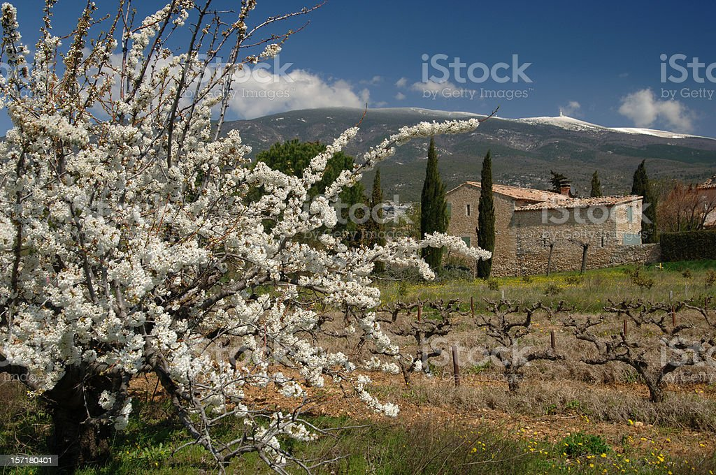 Mont Ventoux in spring stock photo