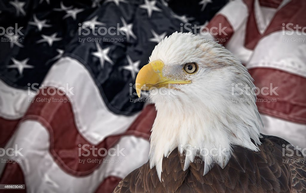 Montage of a focused bald eagle with the American flag stock photo