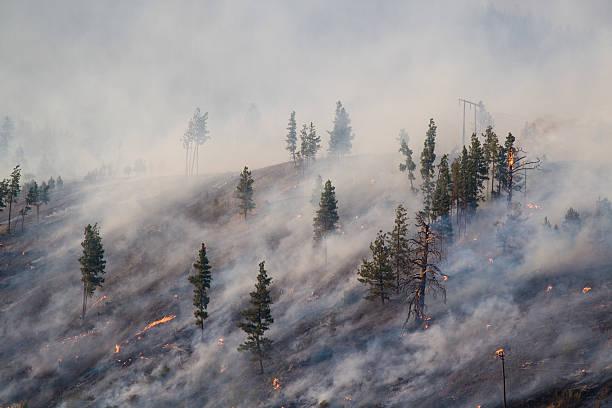 montana forest fire 2007 - bosbrand stockfoto's en -beelden