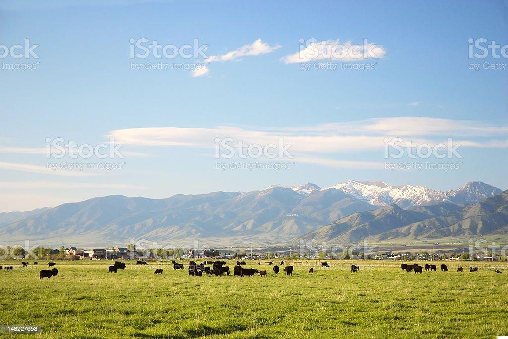 Montana meadow stock photo