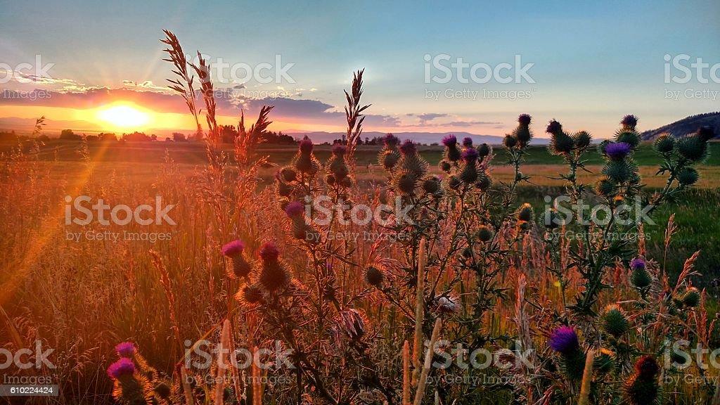 Montana Mountain Range Sunset stock photo