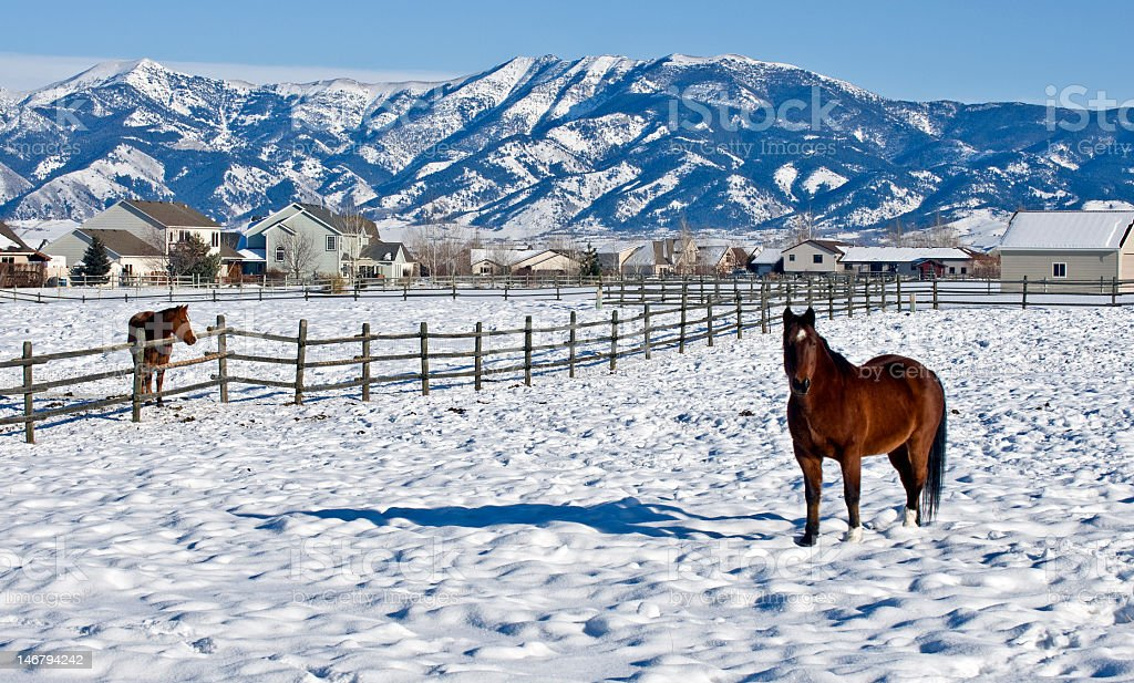Montana mountains during winter with horses in a pasture stock photo