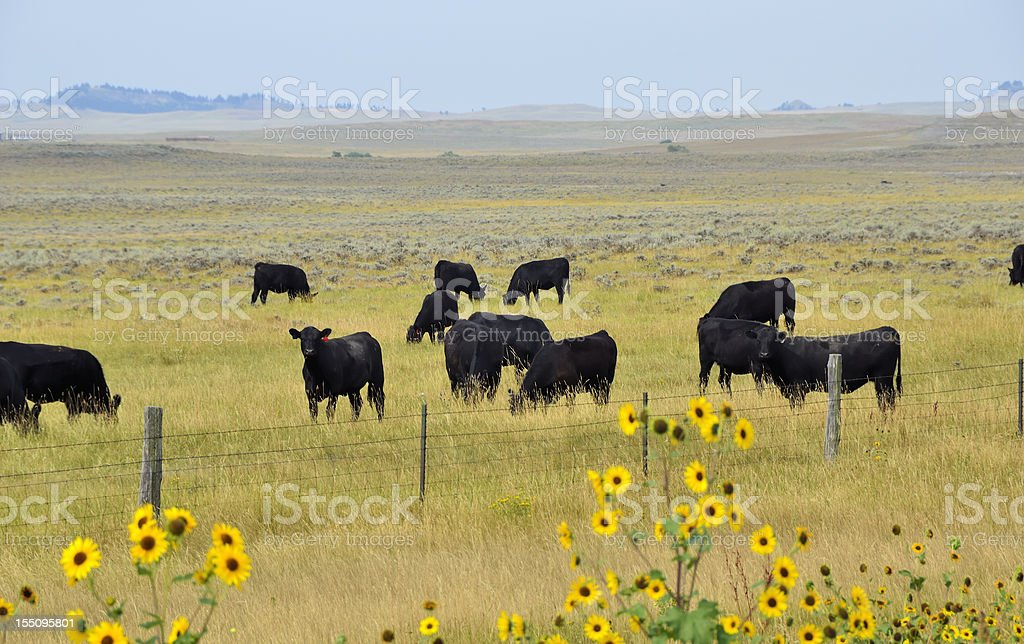 Montana Ranch royalty-free stock photo