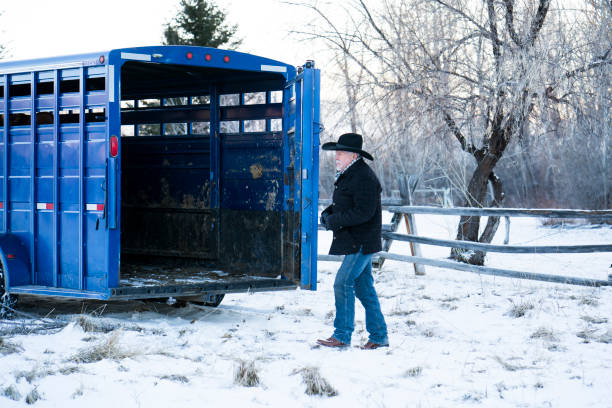 montana ranching - montana western usa stock pictures, royalty-free photos & images